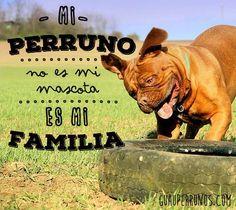 Mi #perruno no es mi #mascota, es mi mi familia