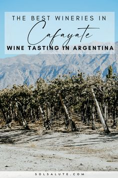 The Best Wineries in Cafayate Argentina | Cafayate wineries in Argentina | Mejores bodegas en Cafayate | Cafayate bodegas | Wine tasting in Cafayate | Wine Tasting in Argentina | Argentina wine regions | Things to do in Argentina | Northwest Argentina | South America wineries | Wine tasting in South America | Wine travel inspiration | Argentina travel | Wine regions in Argentina | Mendoza travel | Things to do in Salta Argentina | Things to do in Cafayate Argentina | Salta Argentina travel Visit Argentina, Argentina Travel, Backpacking South America, South America Travel, Drinking Around The World, Travel Around The World, South America Destinations, Travel Destinations, Equador