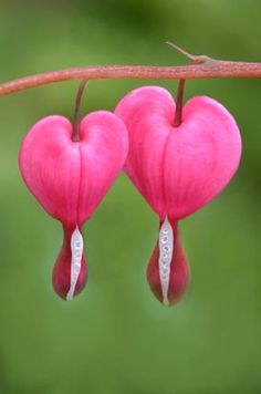hearts be to U