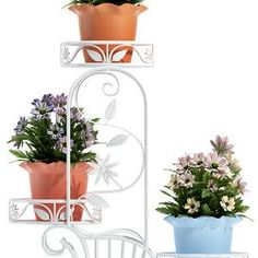plants 118 Delonix Regia, Melaleuca, Ficus, Plant Decor, Planters, Home Decor, Fig, Plants, Interior Design