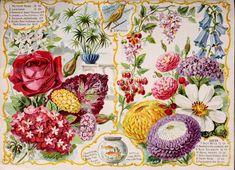 038-Chrysanthemum, Cosmos, Rose, Phlox, Fishes in aquarium, heliotrope, bird, lantana      ...