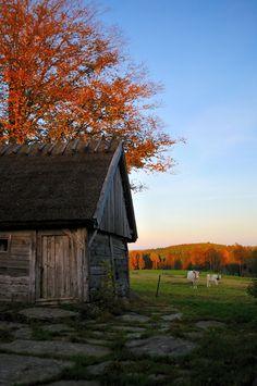 Autumn by Almqvist Photo, via 500px