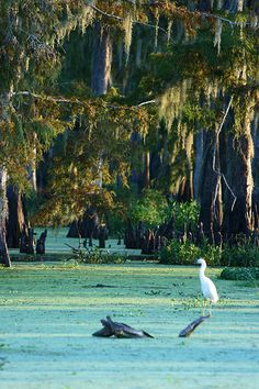 Swamp, photo by juliealicea1947
