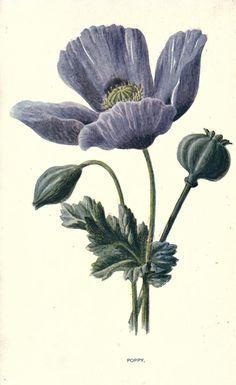 Familiar garden flowers, figured Hibberd, Shirley, 1825-1890 - Hulme, F. Edward (Frederick Edward), 1841-1909