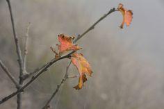 Orange leaf • Autumn in Valle Maira • www.invalmaira.it