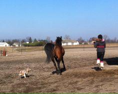 Happy Running, Child, Horse, Arabian Horse, Cocker Spaniel