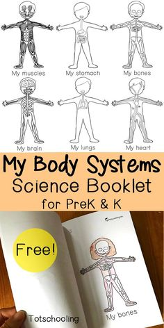 FREE science emergent reader book about the human body systems. Great science activity for preschool and kindergarten.