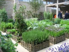Love this style of gardening.  Potager Garden.