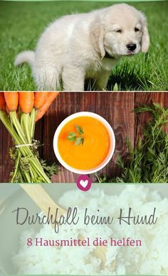 Durchfall beim Hund: Diese 8 Hausmittel schaffen Abhilfe Dog diarrhea can be effectively treated with these 8 home remedies. Pumpkin Recipes For Dogs, Dog Food Recipes, Healthy Recipes, Baby Health, Pet Health, I Love Dogs, Cute Dogs, Diarrhea In Dogs, Food Dog