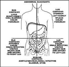 Abdominal nine divisions a and quadrant regions b training abdominal organs in quadrants ccuart Images