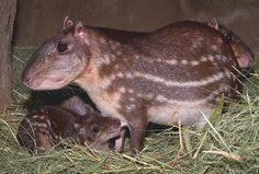 Rio Grande do Sul + animais silvestres - Pesquisa Google