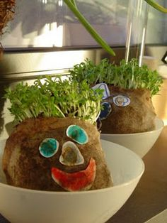 make your own chia pet--- totally doing this!