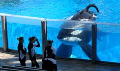 Peta uses US anti-slavery law to sue SeaWorld over killer whales' treatment  Aquatic theme park owners condemn attempt to use 13th amendment in lawsuit as 'baseless and in many ways offensive'