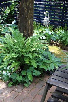 Nora 静子さんの庭 | フローラのガーデニング・園芸作業日記