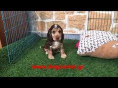 VIDEO - www.dogcenter.gr