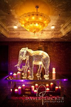 @Audrey Vaughn tell Brad we MUST have the giant lighted elephant ice sculpture ;)