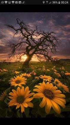 Fields Of Gold, Beautiful Sunset, Beautiful World, Beautiful Flowers, Flowers Nature, Beautiful Morning, Landscape Photos, Landscape Photography, Nature Photography