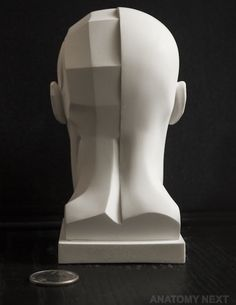 Anatomy Next - store - SKIN / TOPOGRAPHY HEAD