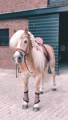 - Art Of Equitation Caballo Haflinger, Haflinger Horse, Most Beautiful Horses, Pretty Horses, Animals Beautiful, Cute Horse Pictures, Horse Photos, Horse Mane, Horse Wallpaper
