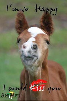 Smooch! #horse kisses