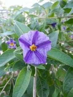 Purple focus