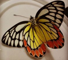 What The Caterpillar Calls The End of The World The Master Calls A Butterfly