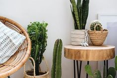 3 Easy Planter Ideas (When You're Too Lazy To Repot!)