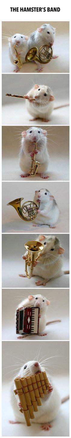 la banda de las ratas