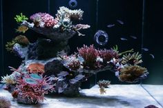 Reef Central is dedicated to the marine reef aquarium hobby. Learn about reef aquarium setup and maintenance, and view coral and marine fish photos. Visit our online community and discuss and chat with hobbyists of all levels from beginner to advanced. Coral Reef Aquarium, Saltwater Aquarium Fish, Saltwater Tank, Marine Aquarium, Fish Aquariums, Live Aquarium, Marine Fish Tanks, Marine Tank, Nano Reef Tank