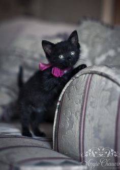 Happy Halloween ~ got the black cat, now all I need is a potion or two :D