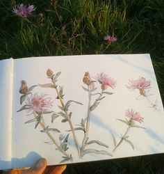 CATALINA Wild flowers  Watercolour and pencil sketch