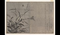 Fireflies and Cricket (Hotaru and Matsumushi), from Picture Book of Selected Insects with Crazy Poems (Ehon Mushi Erabi) Kitagawa Utamaro (Japanese, 1754–1806) Period: Edo period (1615–1868) Date: 1788 http://www.metmuseum.org