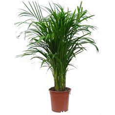 5 φυτά που καθαρίζουν τον αέρα του σπιτιού σας!  #DIY #γλαστρα #γλάστρες #κήπος #υγεία #φυτά #φυταεσωτερικουχώρου