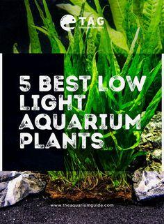 43 best aquarium plants tag images planted aquarium aquariums
