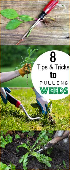 8 Tips and Tricks to Pulling Weeds.  Simple ideas on how to easily remove weeds and keep your yard weed free.  Landscape and gardening solutions.