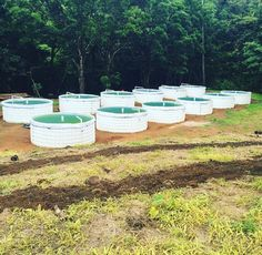 All tanks now prepped and contender bush beans planted in earth beds!  #aquaculture #aquaponicsystems #farming #zerohunger #agriculture #agrotourism #hydroponics #aquaponics #growyourown #growyourownfood #fish #fishtank #ecofarming #sustainable #sustainablefarming #sustainableliving #goodfood #goodfoodforyou #food #plantsomething #greenfood #letsgrow #locallygrown #twitter #facebook #pin #beans