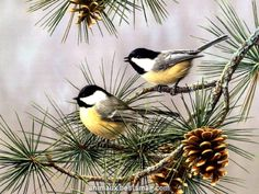 Chickadees & Pine Cones – Keep up with the times. Watercolor Bird, Watercolor Paintings, Christmas Bird, China Painting, Bird Pictures, Colorful Birds, Wild Birds, Bird Art, Beautiful Birds