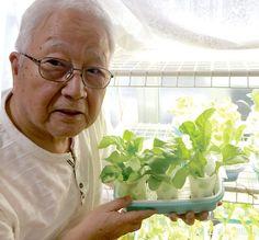 100均スポンジで野菜を作ろう!人気ブロガーのアイデア溢れる水耕栽培