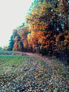 Jesień, natura, spacer, relaks, piękno. True colors... autumn