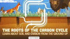 The Roots of the Carbon Cycle | Science | Classroom Resources | PBS LearningMedia