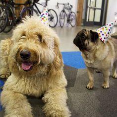 Dog party at #Weebly HQ! Weebly PHOTO PHOTO GALLERY  | SCONTENT.FPAT3-1.FNA.FBCDN.NET  #EDUCRATSWEB 2020-03-13 scontent.fpat3-1.fna.fbcdn.net https://scontent.fpat3-1.fna.fbcdn.net/v/t1.0-9/s960x960/89468368_1755750194568092_6321885637133729792_o.jpg?_nc_cat=106&_nc_sid=8024bb&_nc_oc=AQlMfpuFZVXkhuDk9Uz8zH00lGfHL3-cLVgSRXuL6dqxnbk6QiijZo8tt0BtNozaXYD57igSlfMEUluVwU8c78QF&_nc_ht=scontent.fpat3-1.fna&_nc_tp=7&oh=8d4a8bf64ef35fbccd34db382ed91199&oe=5E913C58