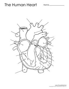 Blank Human Heart Diagram | learning me | Heart diagram ...