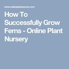 How To Successfully Grow Ferns