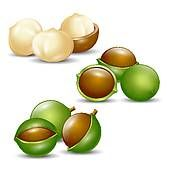 clip art nutty cookies   Nuts clipart and illustrations