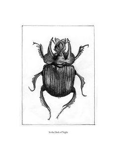 """""""Cabinet de Curiosités"""" Drawing by Chelsea Lakis #drawing #insect #bugs #curiosity #cabinetofcuriosity"""