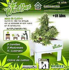 KIT DE CULTIVO Weedbox Dr. Poten Seeds MEDUSSA-PROTECT https://www.amazon.es/dp/B01EHJQXBE/ref=cm_sw_r_pi_dp_uuPHxb8G8ZJXJ