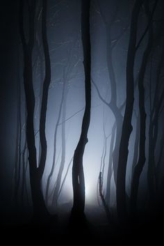 ~~Shot in the dark ~ misty foggy night, Stanmer Park, Brighton by Finn Hopson~~ Landscape Photography, Nature Photography, Shot In The Dark, All Nature, Tree Forest, Dark Wood, Belle Photo, Enchanted, Mists
