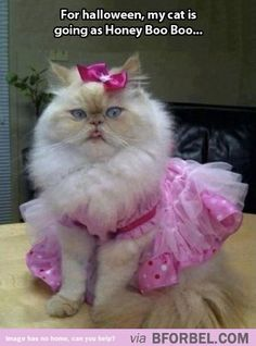 Cat costume idea- Honey Boo Boo this is the best!