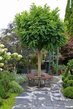 Smakfullt i Lund Plants, Patio, Planting Flowers, Shrubs, Home And Garden, Trees And Shrubs, Patio Garden, Garden Planning, Garden