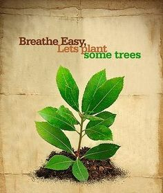 Today is World Environment Day…. Take a stand to protect our environment…  Let us all pledge to plant a sapling today. You can do it on your windowsill, in your building vicinity or office premises. Imagine if each of us sow just one seed, how significantly we can contribute to make our surroundings green.   Spread the message...